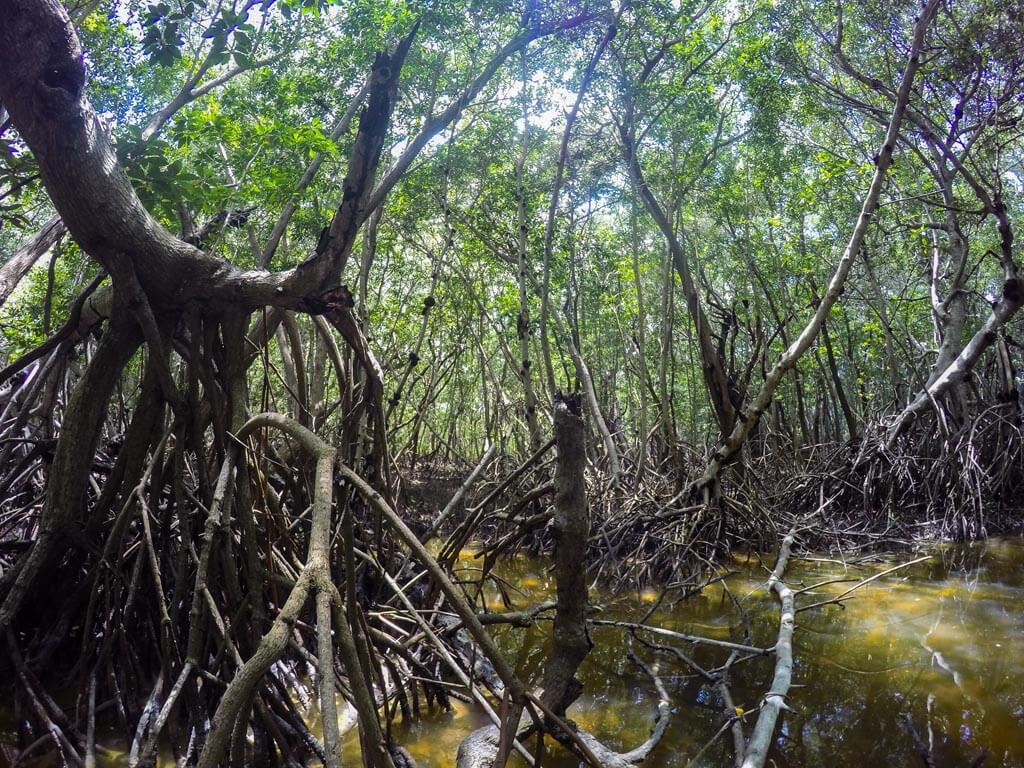 Celestun, la foresta di mangrovie
