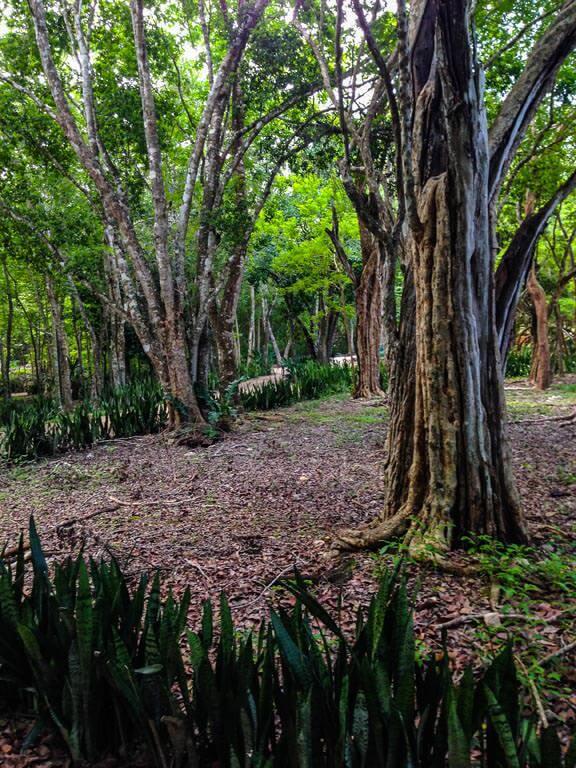 La giungla in cui è immersa Chichén Itzá