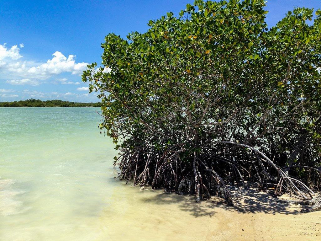 La Riserva della Biosfera di Rio Lagartos