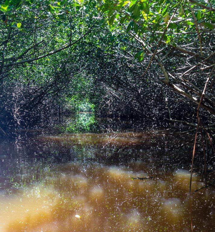 La magia delle mangrovie