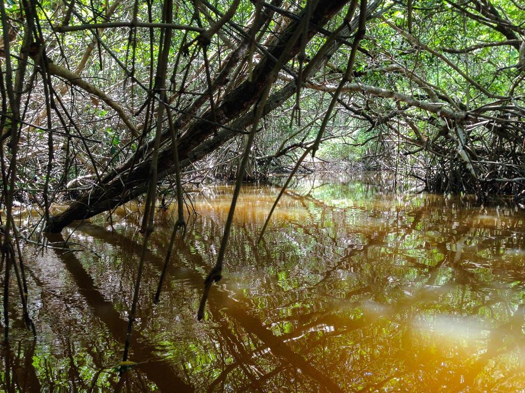 Celestún, la foresta di mangrovie