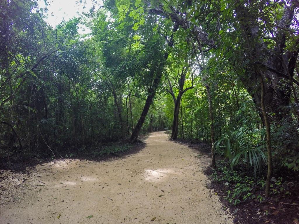 Sentieri nella giungla