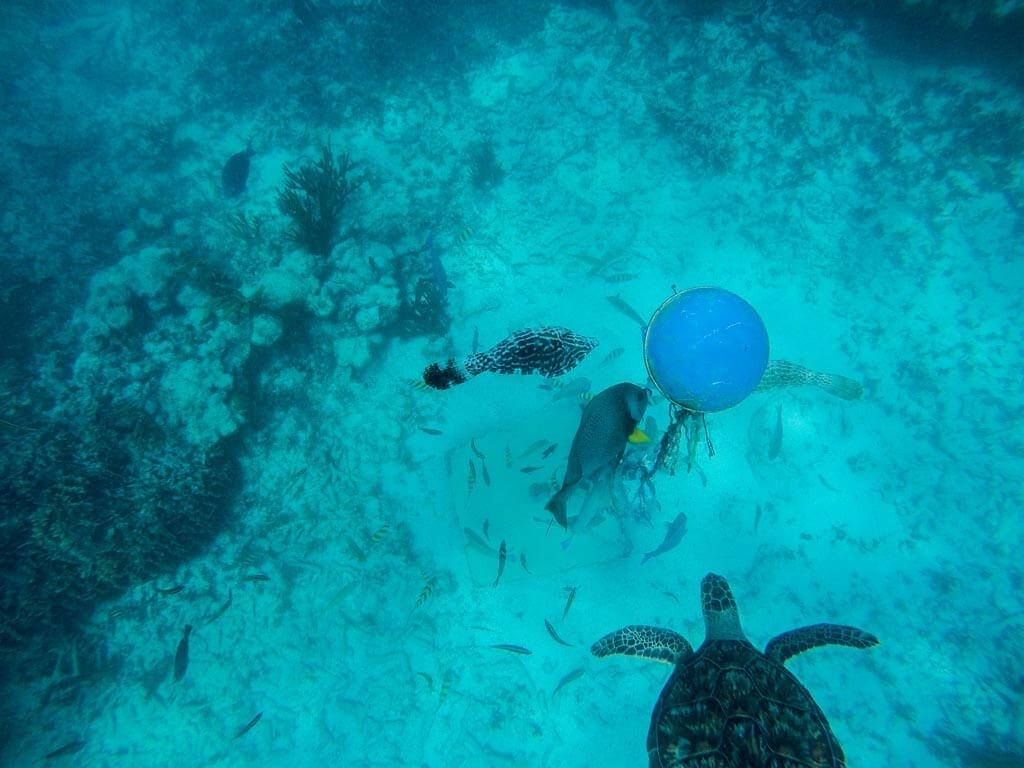 Tulum - Snorkeling
