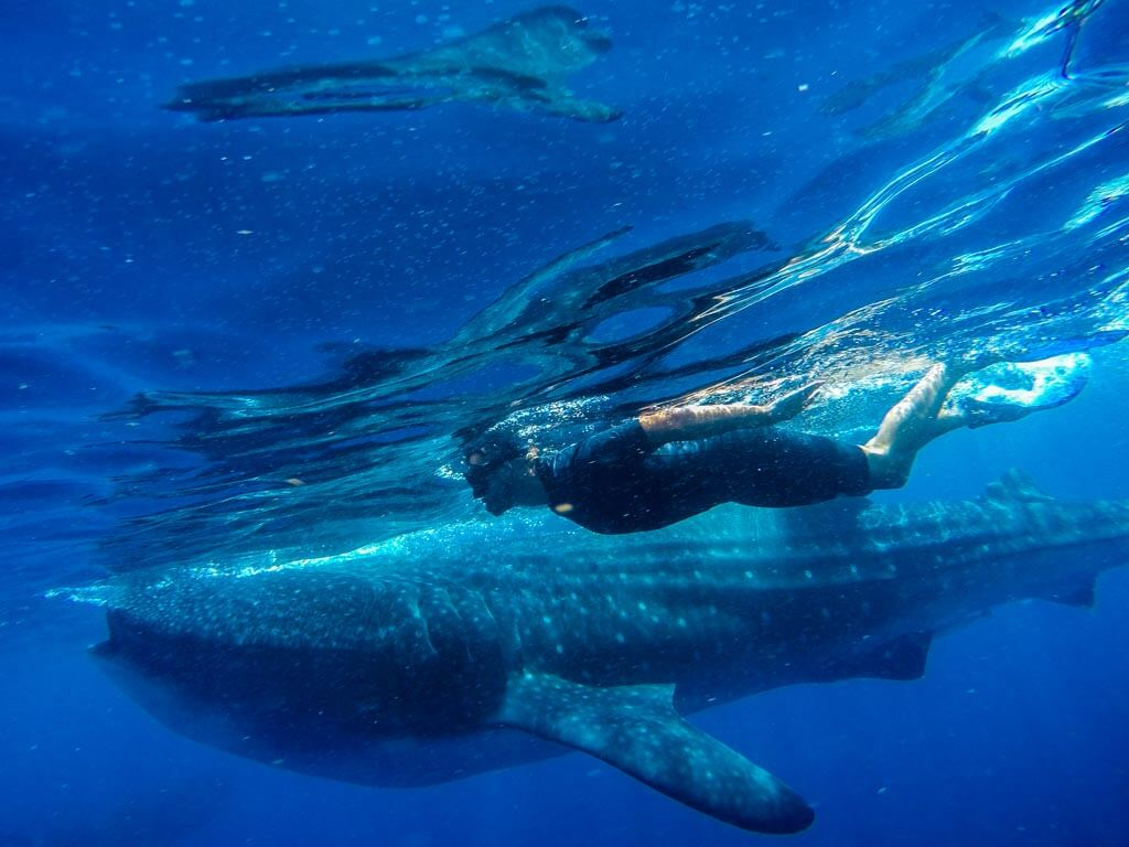 Messico - escursione Squali Balena
