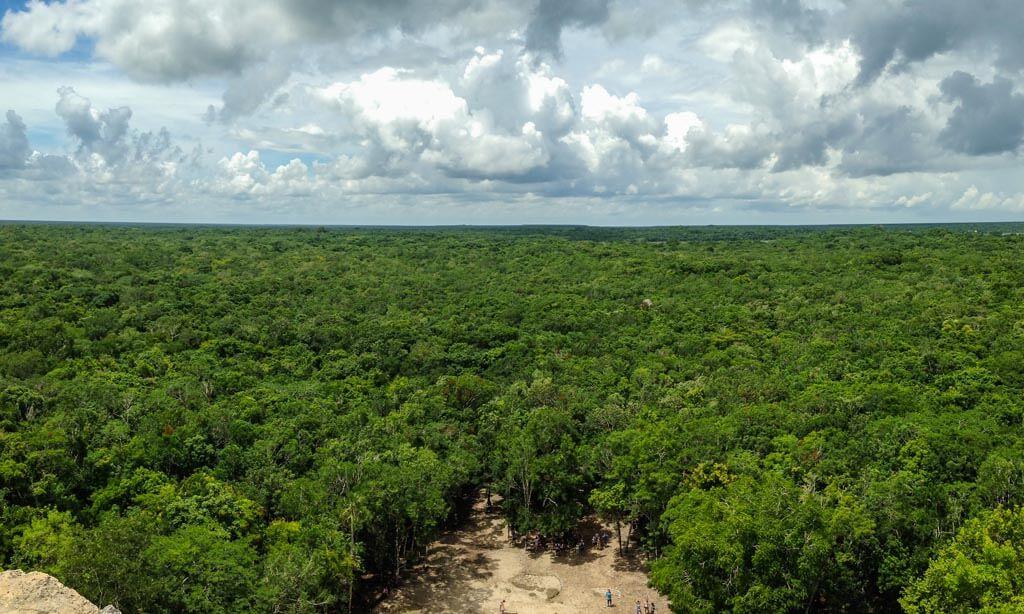 Panoramica della giungla