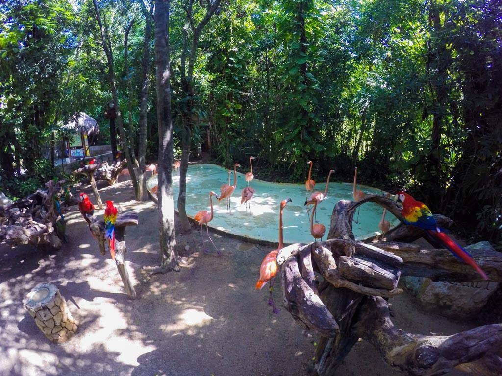 Xcaret parco nella riviera maya