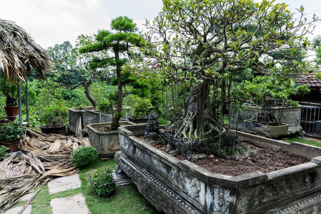 Bonsai a Ba Trang
