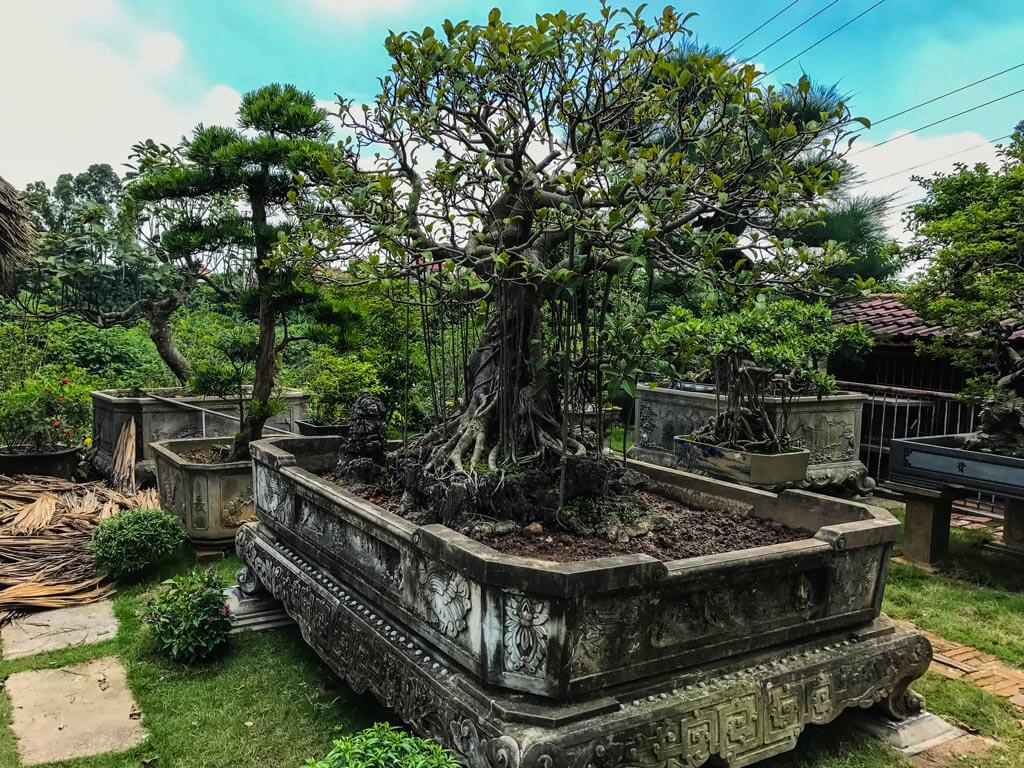 Il giardino dei bonsai a Ba Trang