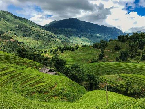 Terrazza di riso a Sa Pa