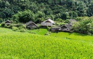 Il verde delle risaie