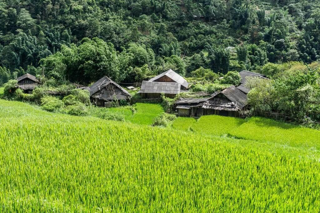 Sapa - Il verde delle risaie
