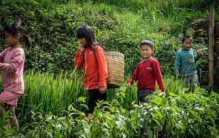 Bambini che raccolgono verdura a Sapa