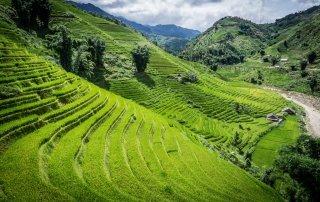 Le verdi e immense terrazze di riso viste dall'altro