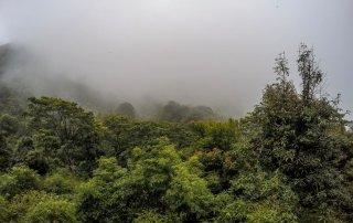 Vegetazione immersa nella nebbia