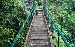 Un ponte di legno attraversa la vegetazione