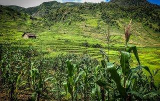 Un capanna appare tra i campi di riso