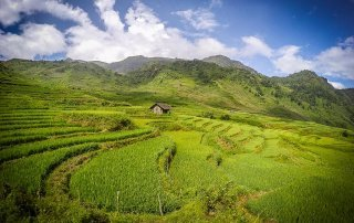Una capanna di legno tra le risaie