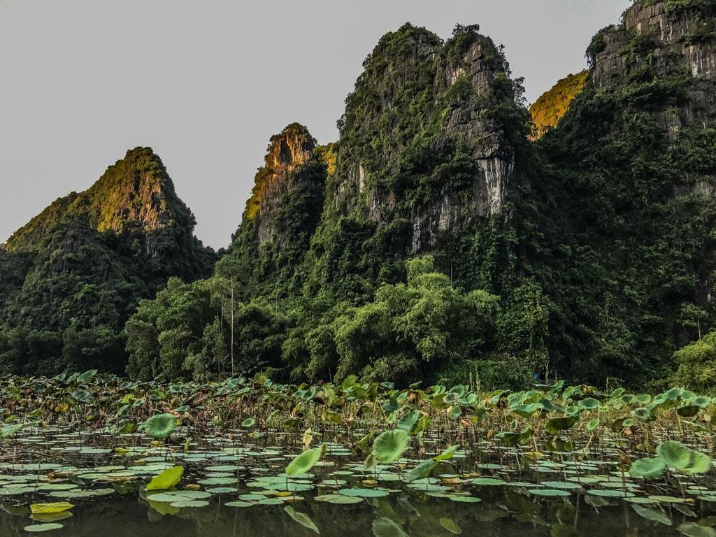 Vietnam del nord - ninfee sul fiume Tam Coc