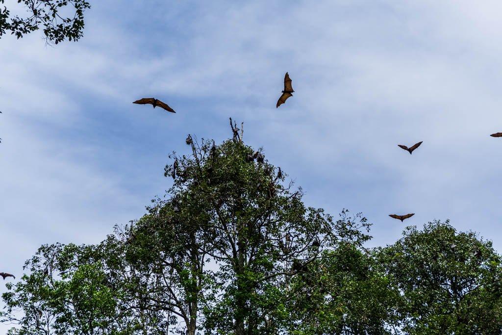 Pipistrelli che volano in cielo