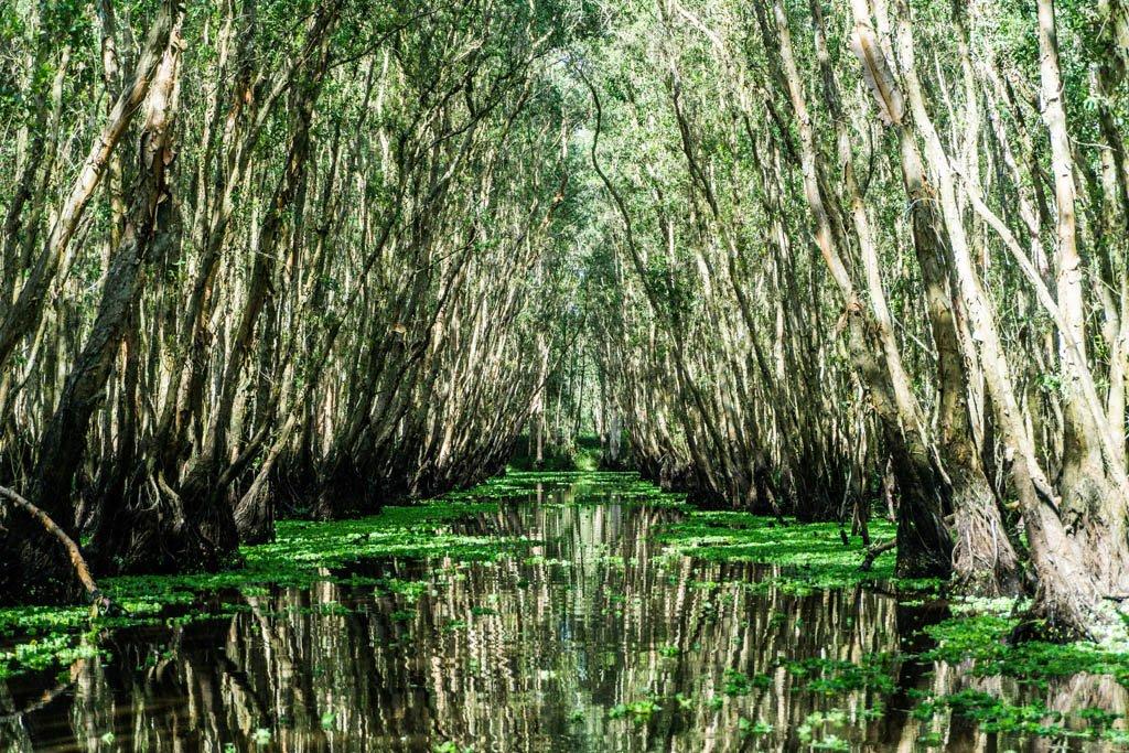 fiume coperto di ninfee e alberi di melaleuca