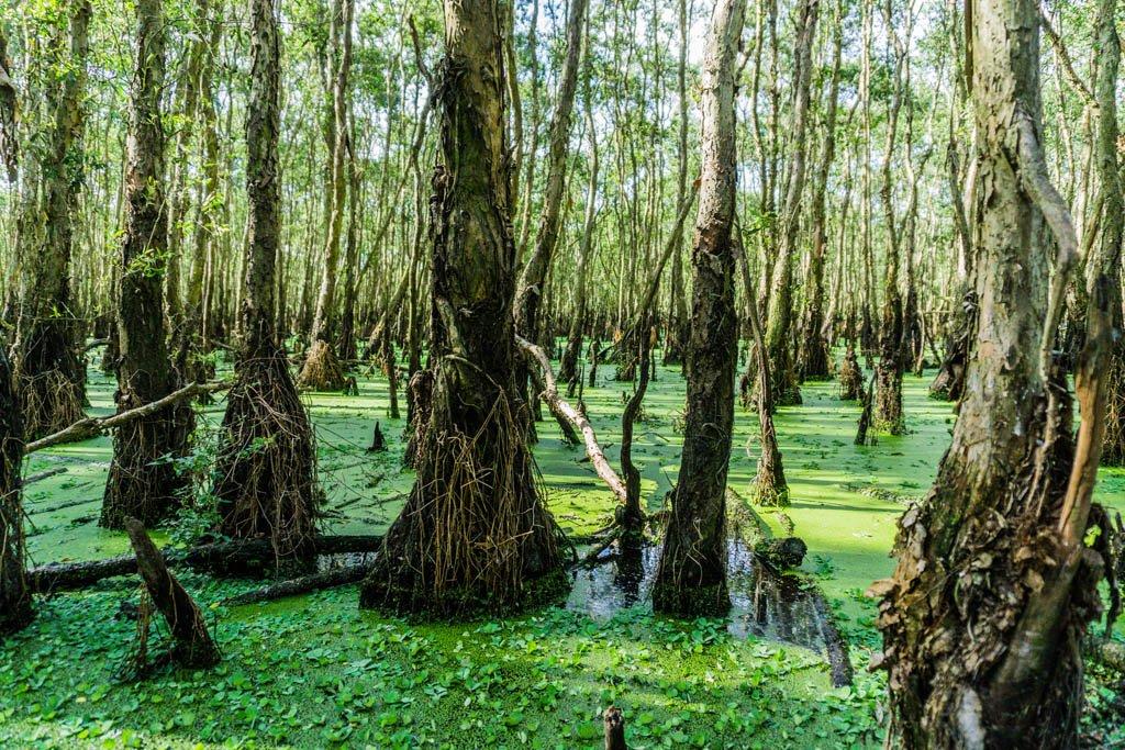 La foresta di Tra Su coperta dal manto verde