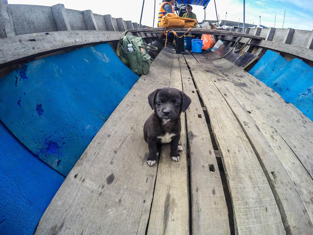 Cucciolo di cane nero a bordo della barca