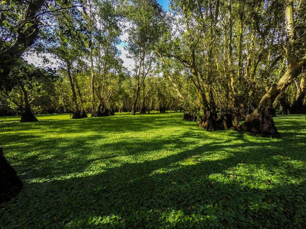 La foresta di Tra Su ricoperta da un manto verde
