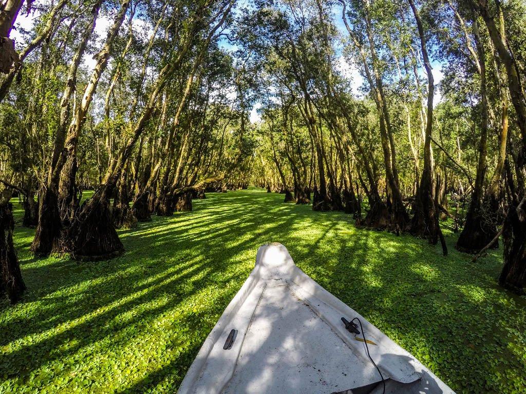 barca bianca che attraversa il fiume coperto di un manto verde nella foresta di Tra Su in vientam