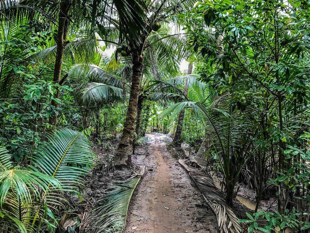 Strada sterrata dentro la giungla