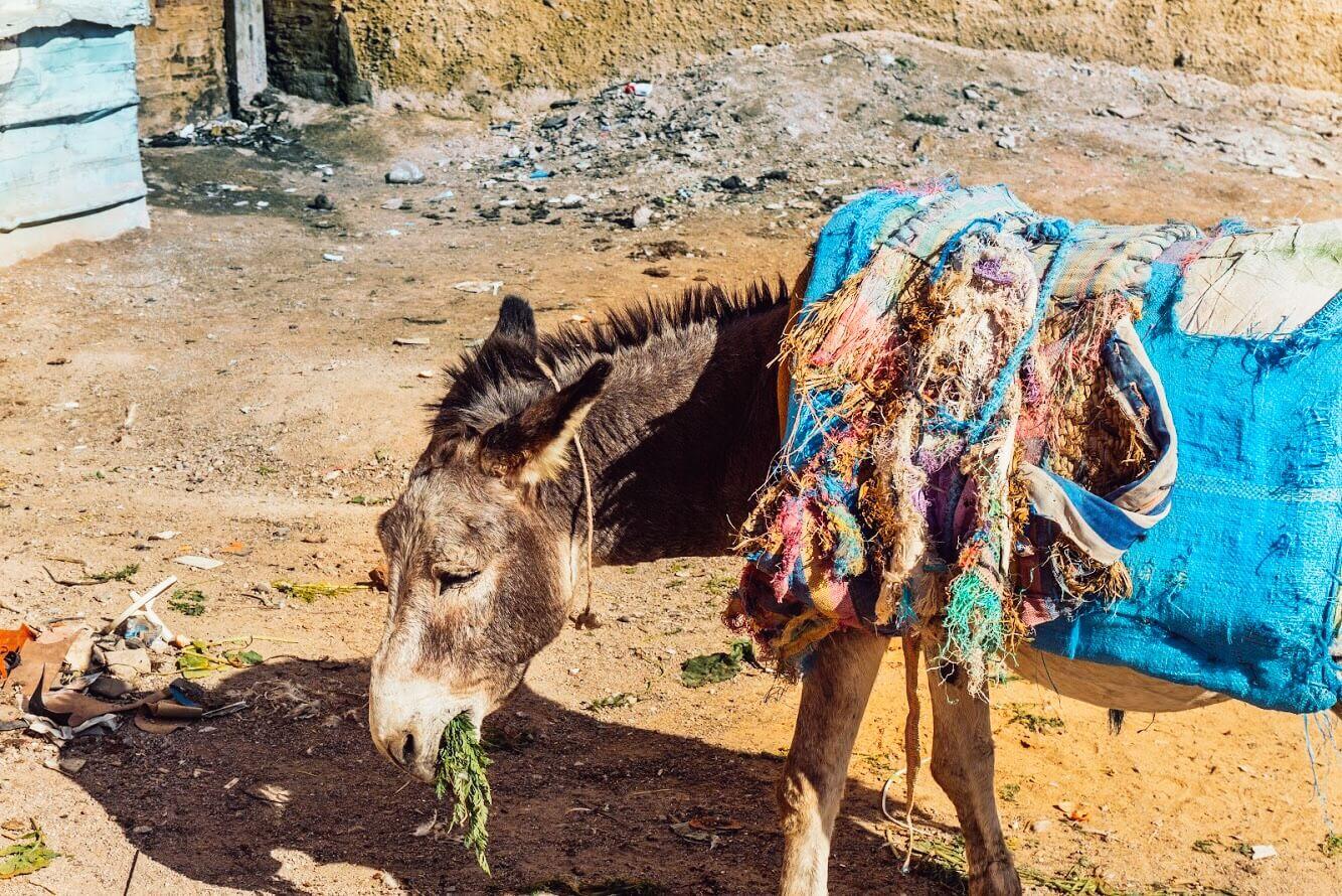 Marocco itinerario di viaggio_Fès