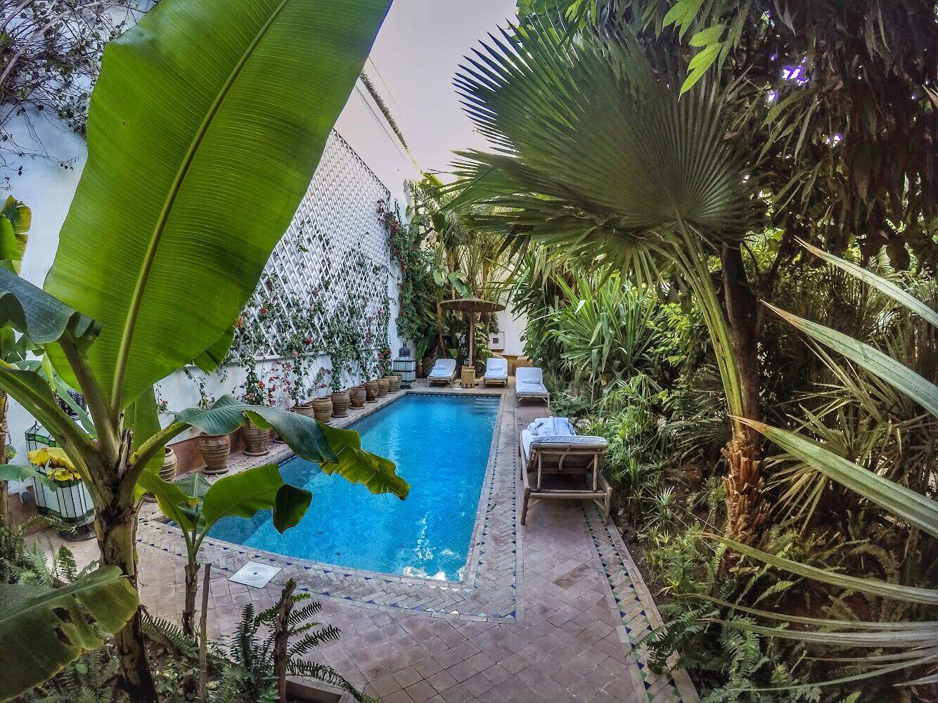 Piscina circondata da palme e piante varie