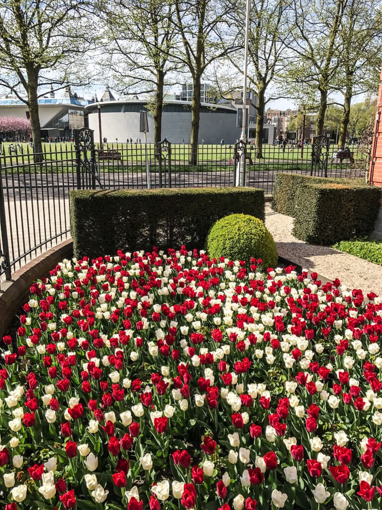 Museumplein_tulipani