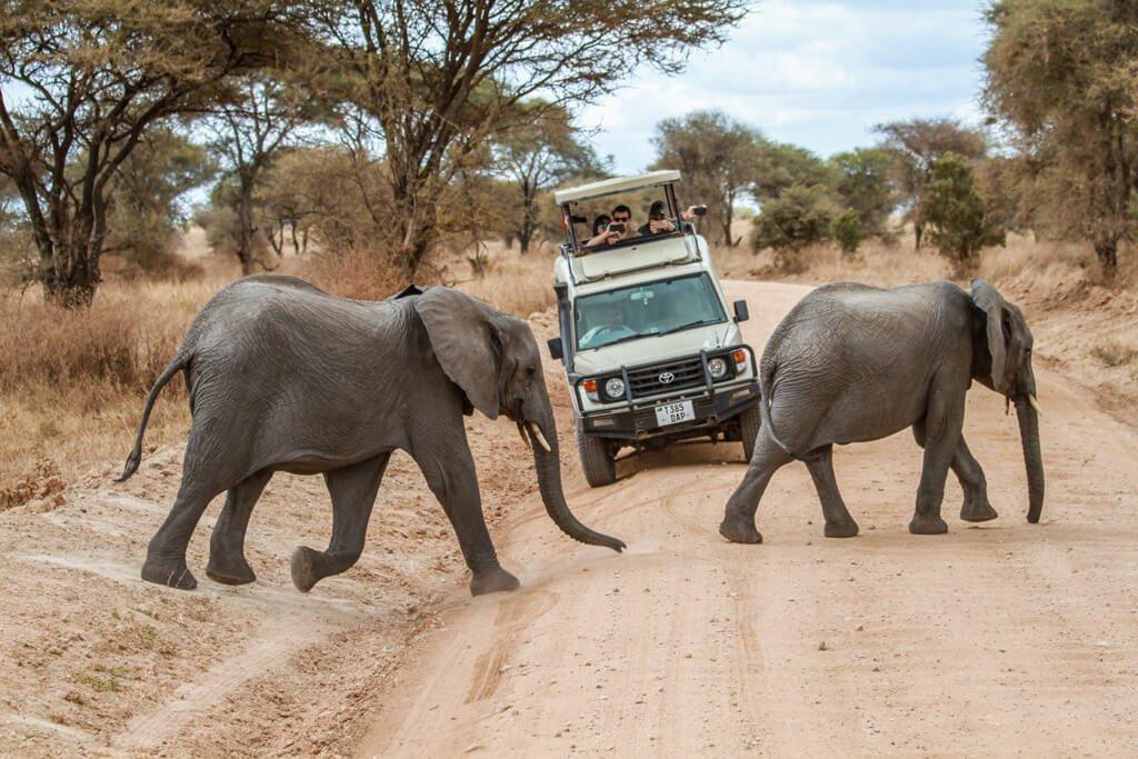 Tanzania_Tarangire National Park
