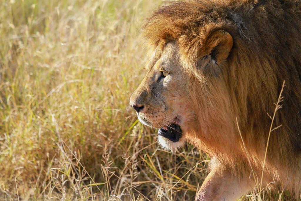 Tanzania_Serengeti National Park