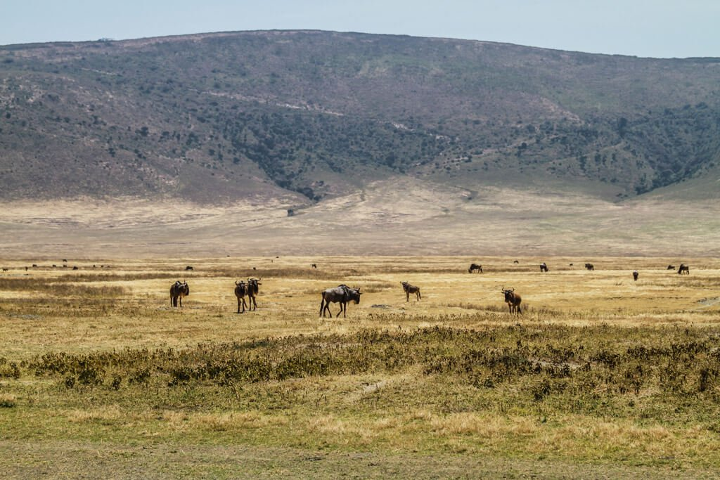 Safari in Africa_Ngorongoro