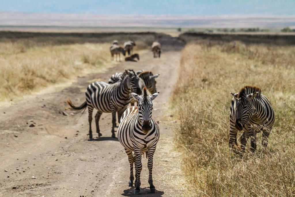 10 MOTIVI PER VISITARE L'AFRICA ALMENO UNA VOLTA NELLA VITA