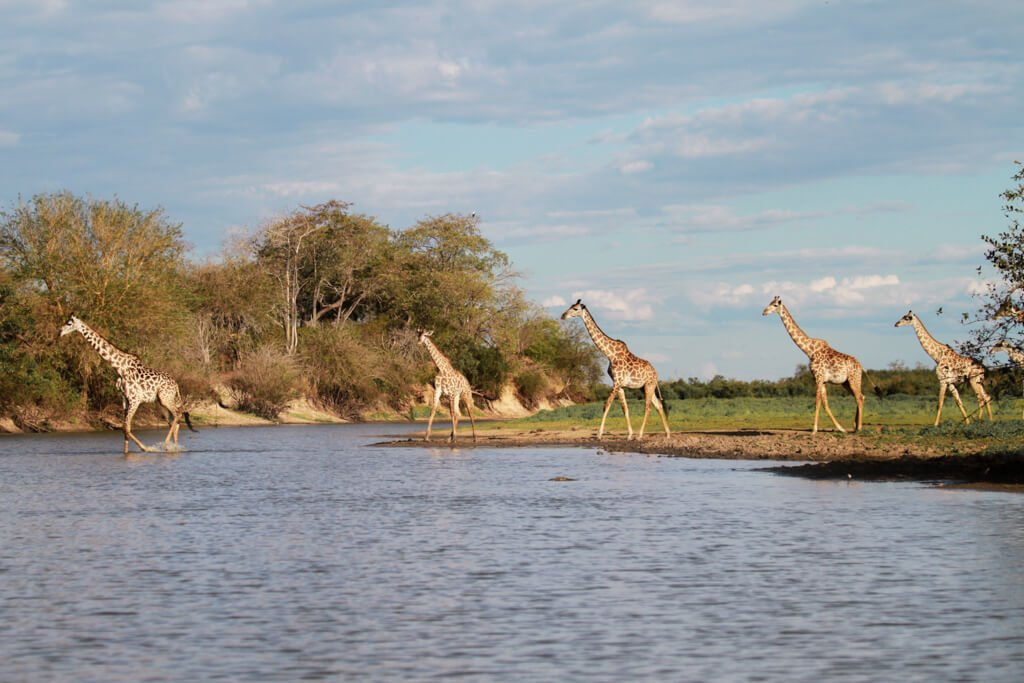 Safari in Africa_Selous Game Reserve