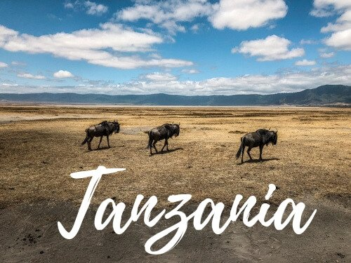 Bufali nel parco del Ngorongoro - Copertina Tanzania