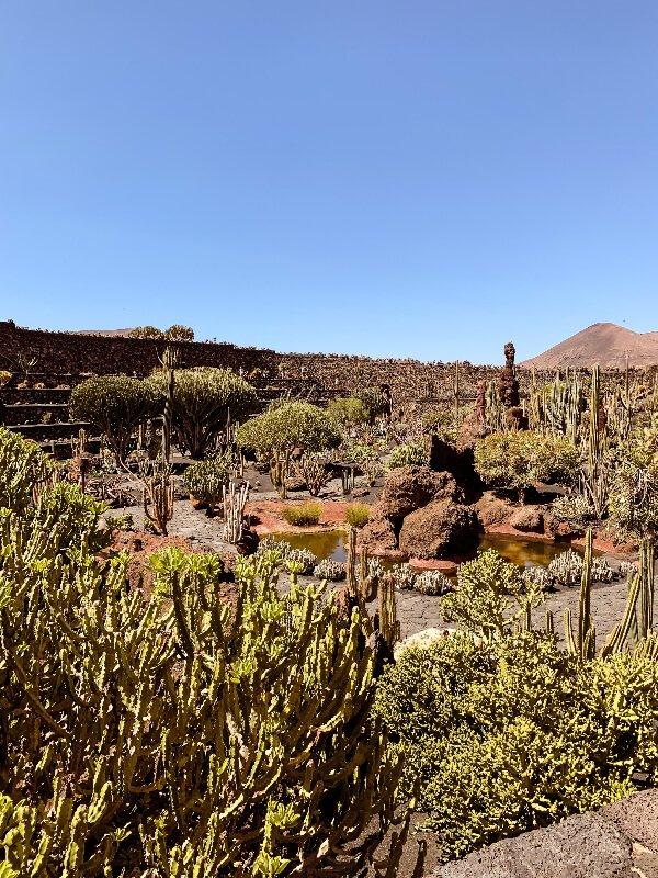 Lanzarote cosa vedere_il giardino dei cactus
